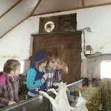 Bevers & Welpen - Boerderij bezoek - 20140322_101408.jpg
