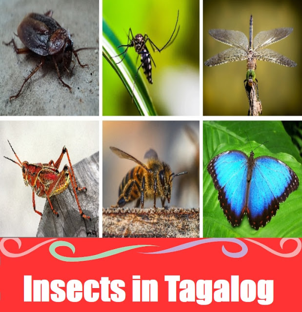 Insect Names in Tagalog
