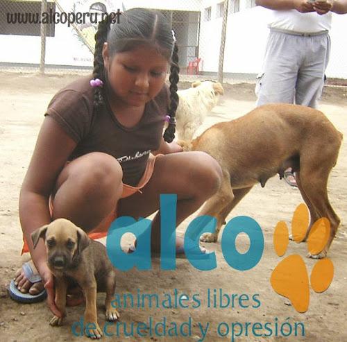 Asistencia Hualcara Cañete terremoto 2007 (4)