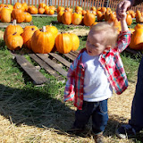 Pumpkin Patch - 114_6541.JPG