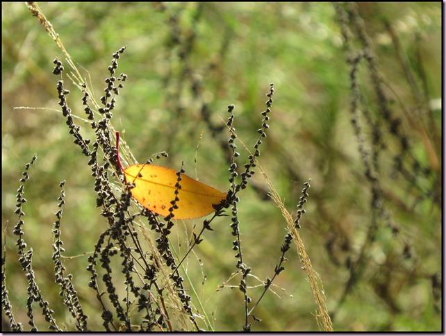 leaffrIMG_0355