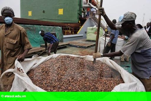 Hình 1: Indonesia kêu gọi giảm thuế nhập khẩu cacao vào châu Âu