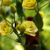 Fleur_galerie