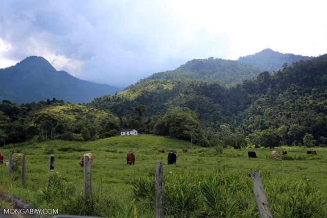 Cattle grazing on a deforested plain in Brazil. Photo: Rhett A. Butler / Mongabay