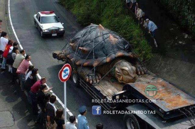 World's largest tortoise
