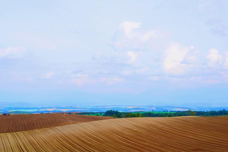 美瑛 ルベシベの丘 写真4