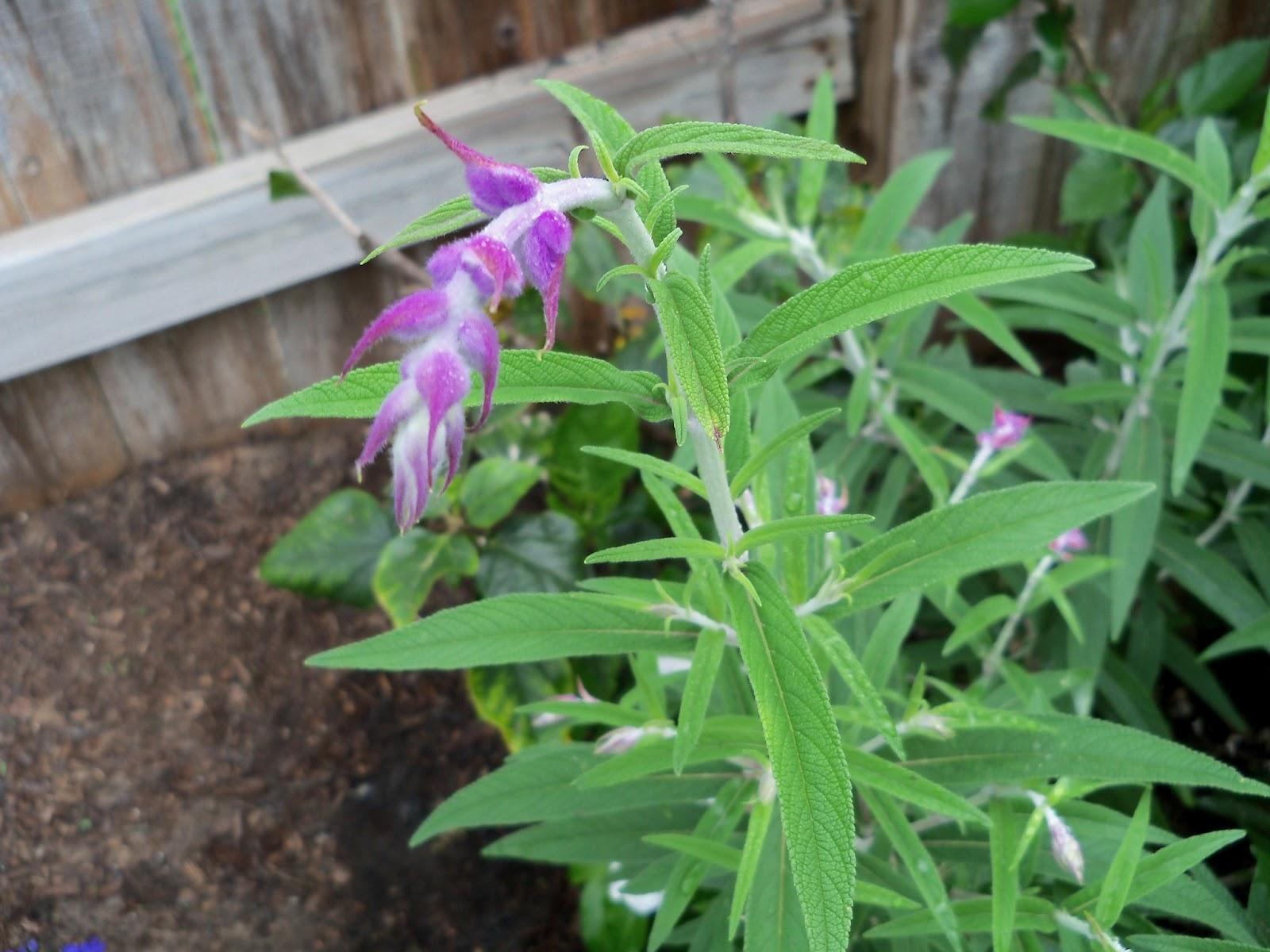 Gardening 2012 - 115_1333.JPG