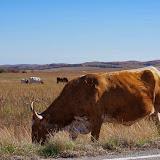 11-09-13 Wichita Mountains Wildlife Refuge - IMGP0396.JPG