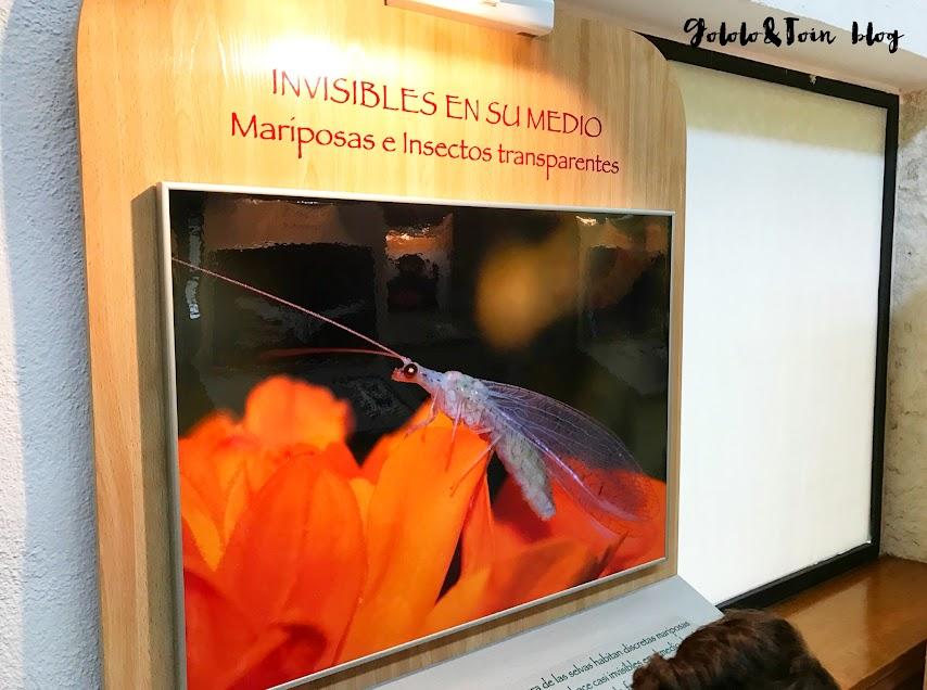 san-lorenzo-escorial-mariposas-insectos-invisibles-centro-naturaleza