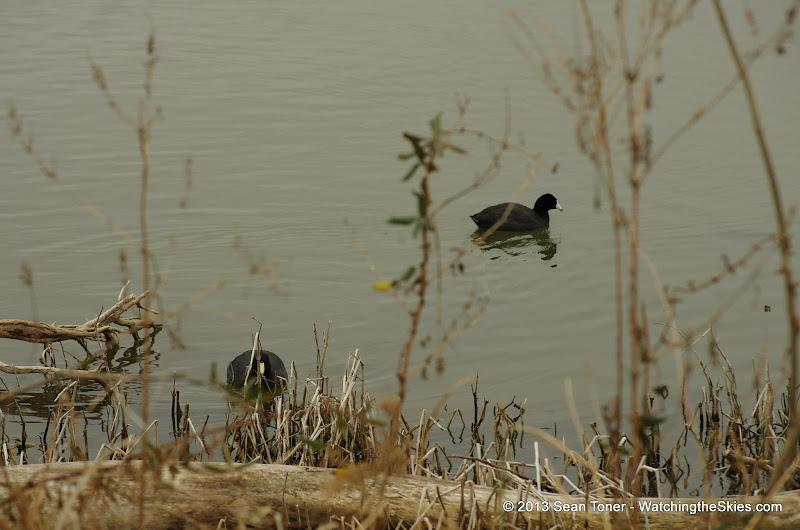 01-26-13 White Rock Lake - IMGP4341.JPG