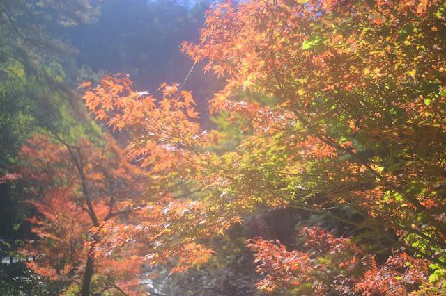 昇仙峡紅葉