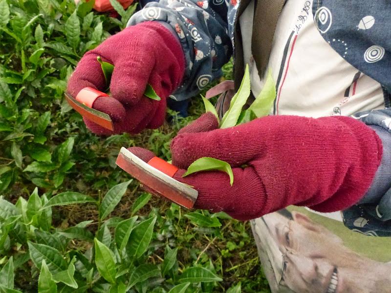 des gants ciseaux