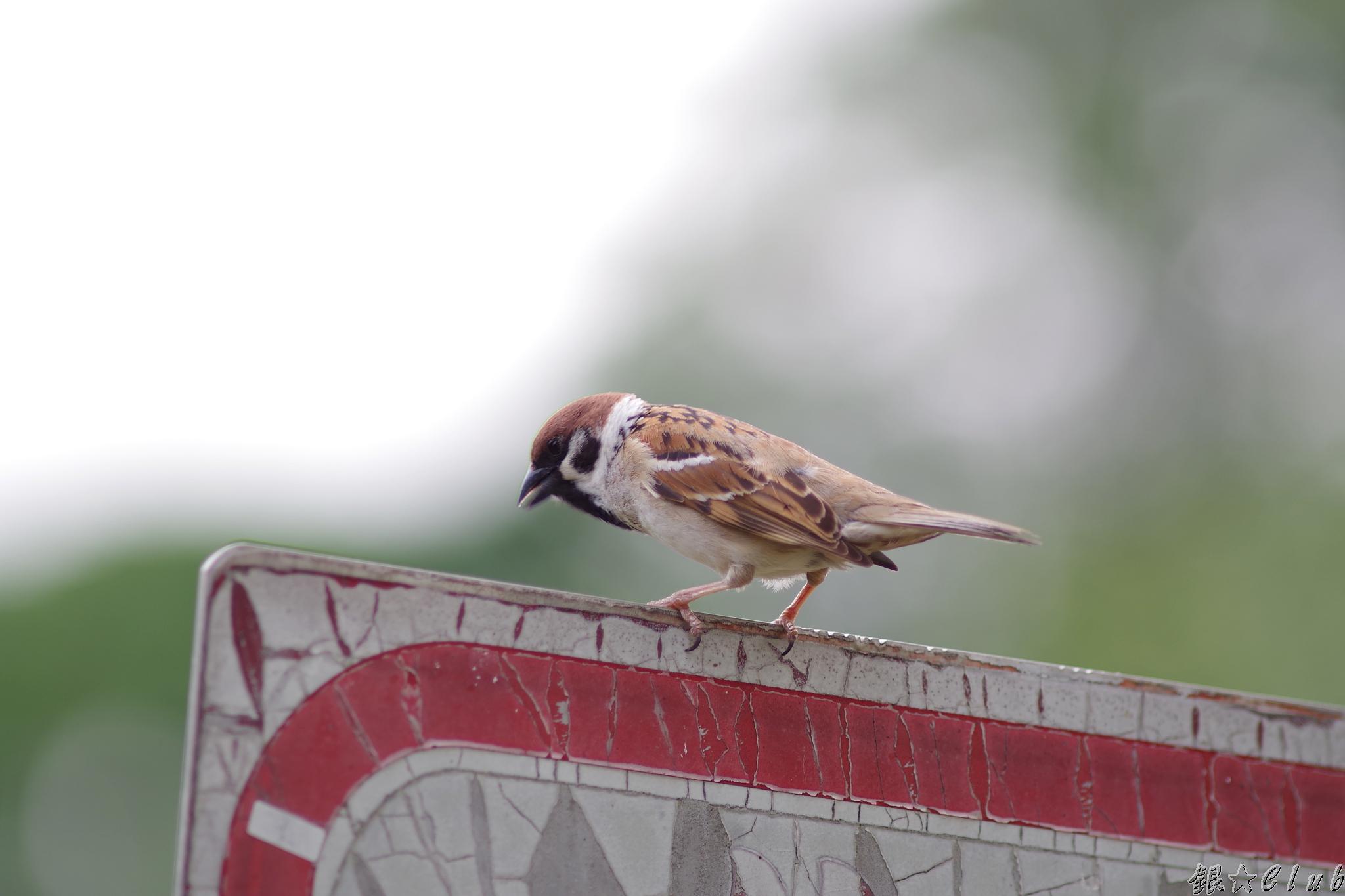 台中中興大學 - 鳥滿為患