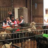 Welpen - Naar de boerderij - IMG_5489.JPG