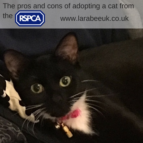 Family The Pros And Cons Of Adopting A Cat From The Rspca