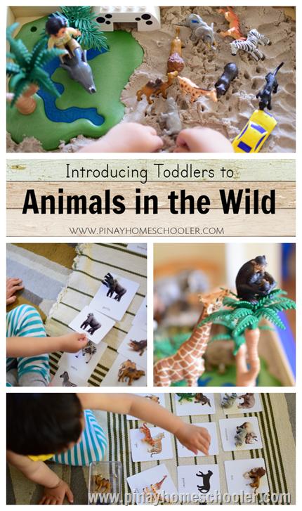 Animals in the Wild