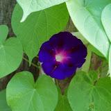 Gardening 2011 - 100_7495.JPG