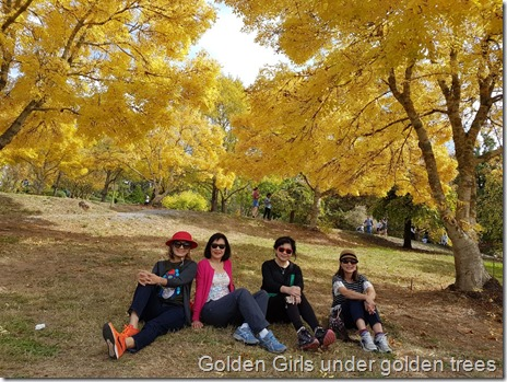 Golden girls under the golden trees