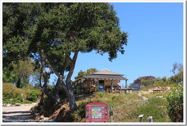 160813_UCSC_Arboretum_260
