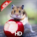 Hamster Wallpaper – HD Wallpaper icon