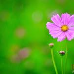 Flower 021_1280px.jpg
