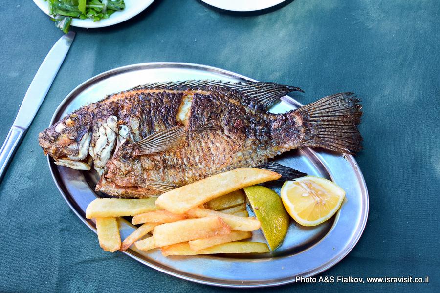 Рыба Петра или мушт на обед на Кинерете. Экскурсия Светланы Фиалковой.