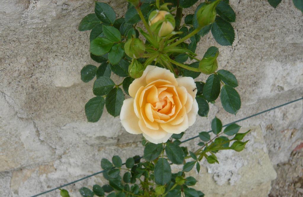 [Spring+flowers9n%5B3%5D]