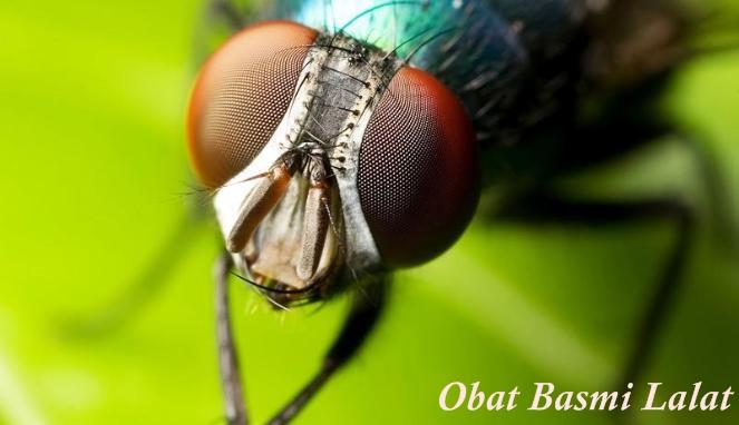 Obat Basmi Lalat