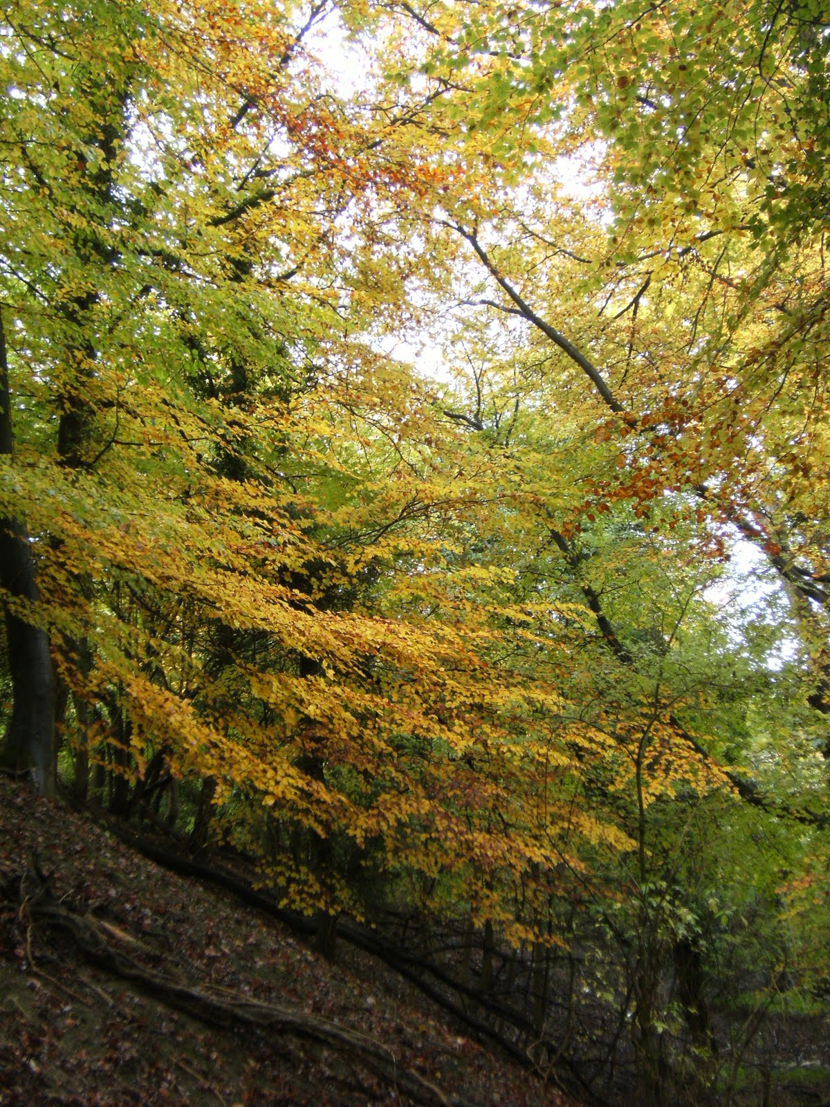 1010300018 Autumn on the North Downs Way