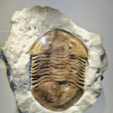 Houston Museum of Natural Science - 116_2687.JPG
