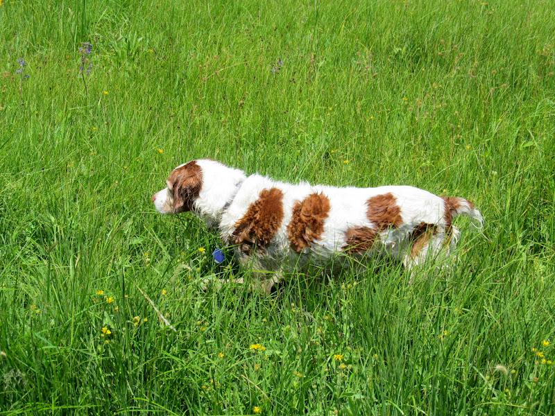 Photo: Torrey in the grass