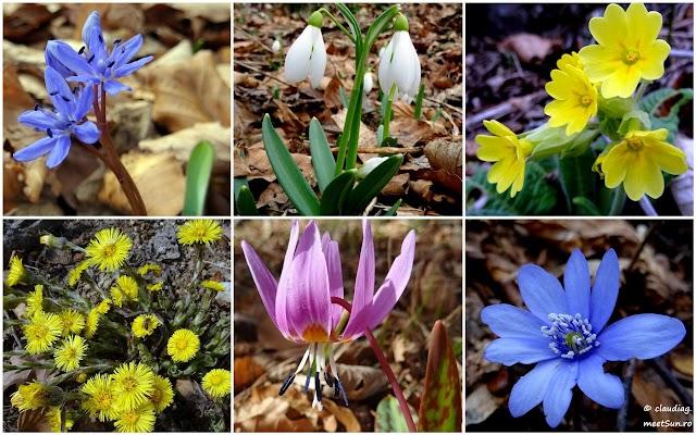 flori-primavara-timpurie.jpg
