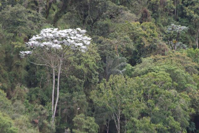 Au Nord de Cuellaje, 2000 m (Imbabura, Équateur), 10 décembre 2013. Photo : J.-M. Gayman