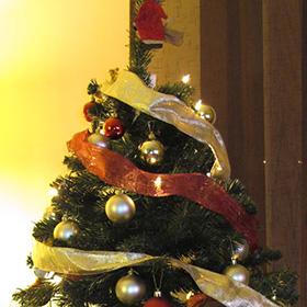 Campaña de Recogida de Árboles de Navidad 2016 en Madrid