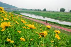 한강 난지공원 길