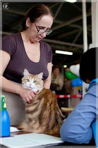 cats-show-24-03-2012-fife-spb-www.coonplanet.ru-056.jpg