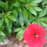 Gardening 2012 - IMG_3342.JPG