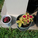 Gardening 2010, Part Two - 101_3119.JPG