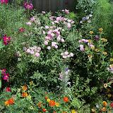 Gardening 2010, Part Three - 101_4383.JPG