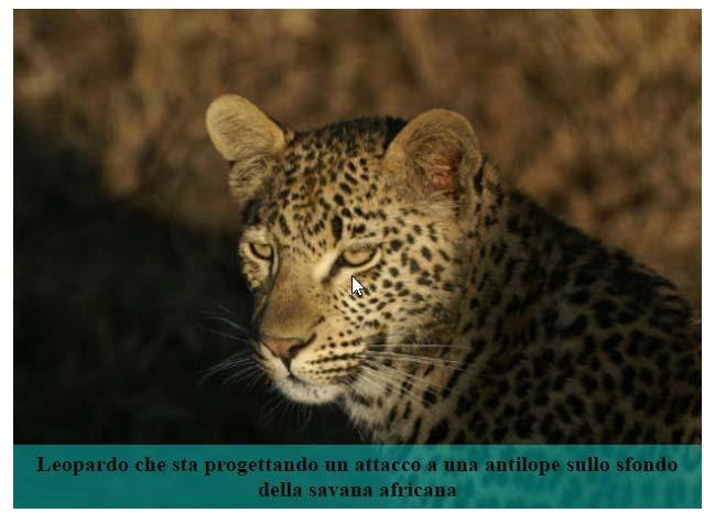leopardo-descrizione