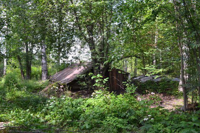 в_лесу_v_lesu