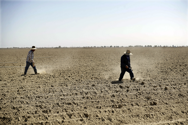 In this Wednesday, 19 September 2018 photo, farmworkers Joaquin Reynosa, left, and Jose Mejia, lay down irrigation pipes for the upcoming lettuce harvest in Huron, Calif. In Huron, jobs not displaced by changes in farming are mostly done by hand under a merciless sun and residents struggle to scrape by. Photo: Marcio Jose Sanchez / AP Photo