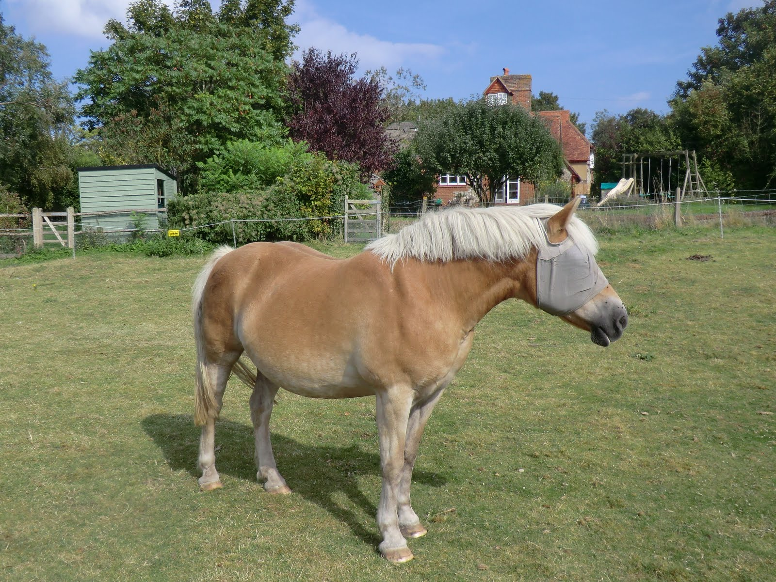 CIMG4749 Horse in field, Wepham