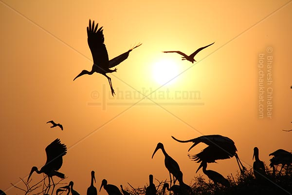 Painted storks silhouette