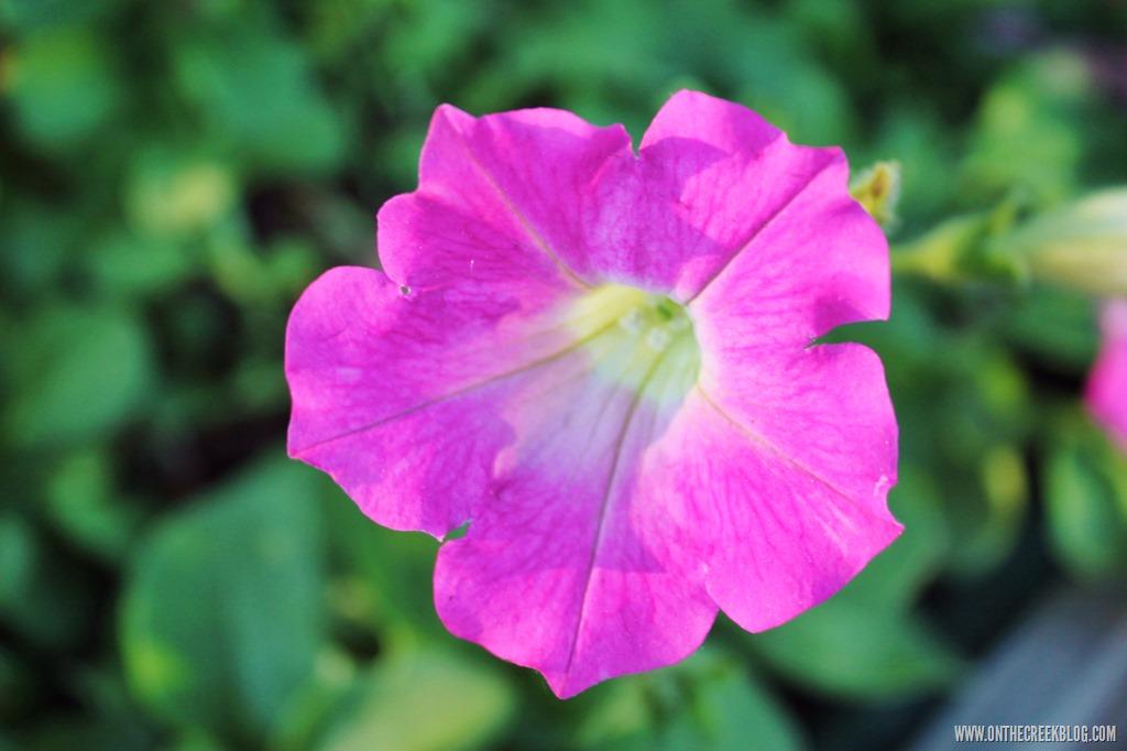 [flower10%5B10%5D]
