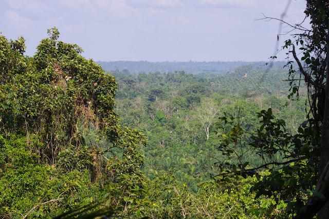 Déforestation et plantation de palmiers à huile. Tunda Loma (Calderon, San Lorenzo, Esmeraldas), 28 novembre 2013. Photo : J.-M. Gayman