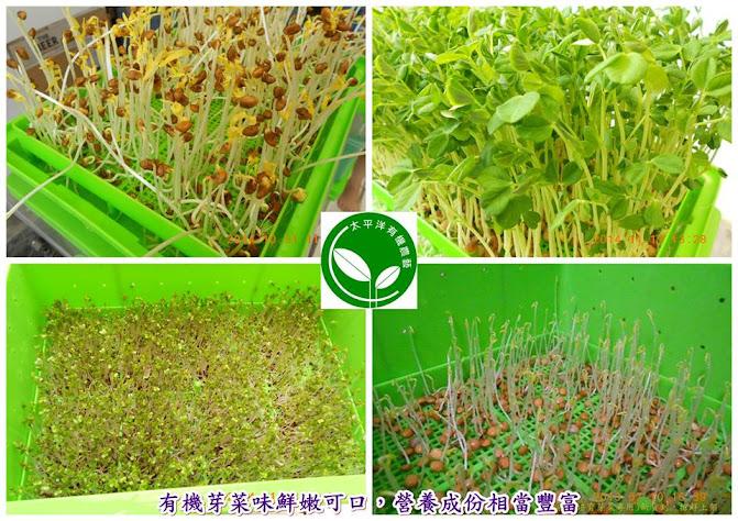 有機紅扁豆芽菜苗(圖)有機培育中的空心菜芽苗、青花椰芽菜苗、豌豆芽菜苗、扁豆芽菜苗
