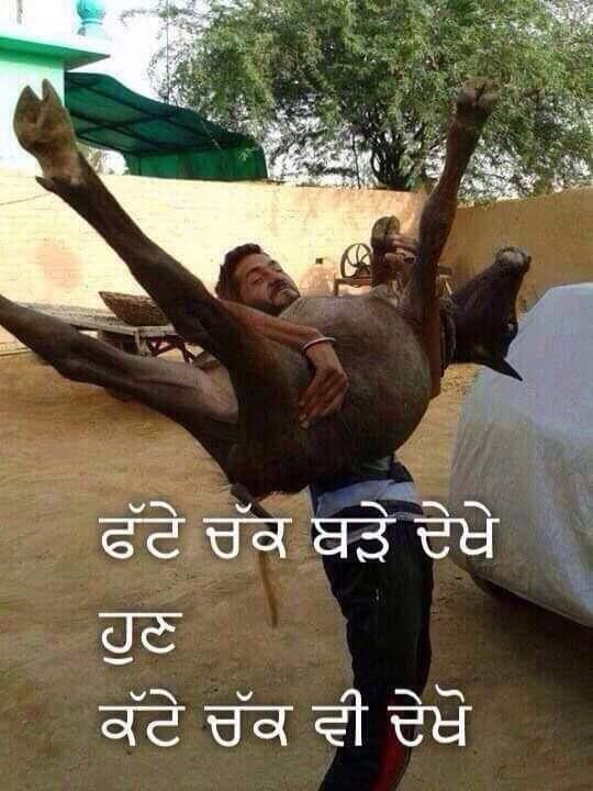 Punjabi funny Whatsapp status