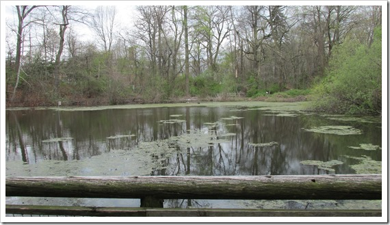 2016-04-23 Conecticut, Fairfield - Bird Craft Museum Sanctuary - Water Scene