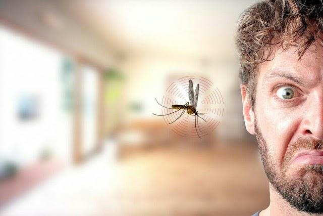 मच्छर कान में क्यों आते हैं और काटने से पहले गुनगुन हैं?  वजह जानने के लिए आप भी हेरान होंगे